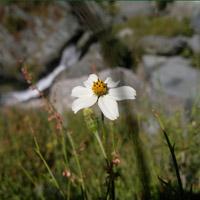 Flower Nokia N8 by Jinesh