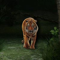 Tiger Nokia N8 theme thumb
